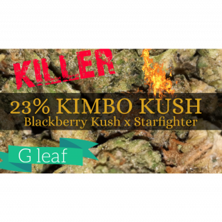 KIMBO KUSH FROM G-LEAF TOTAL KNOCKOUT! MUST SEE!