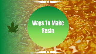 Different Methods of Cannabis Resin Production